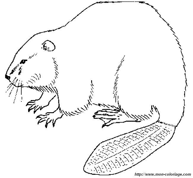 ausmalbilder verschiedene tiere  bild biber 13