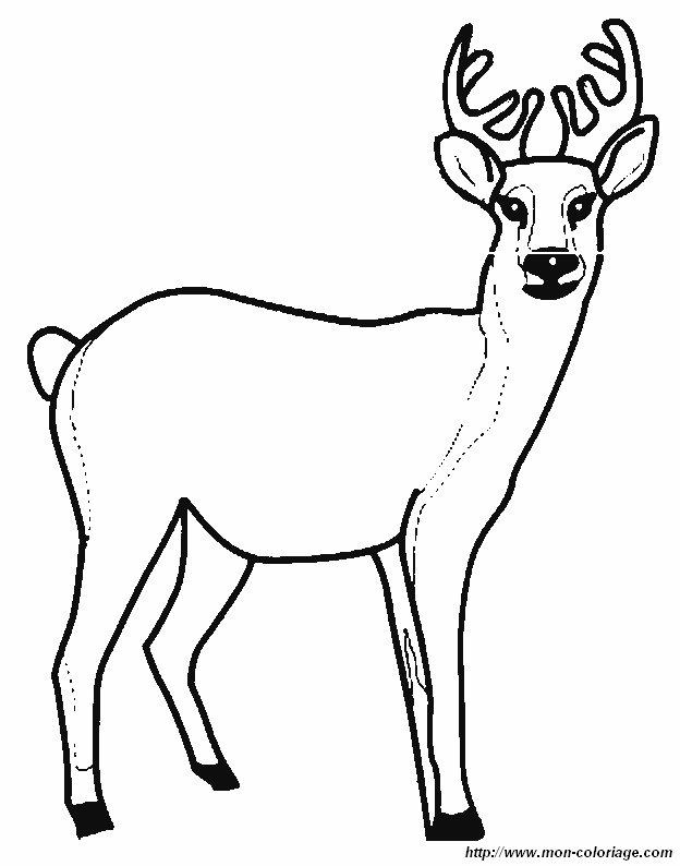 Ausmalbilder Verschiedene Tiere Bild Hirsch 1