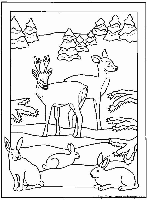 Ausmalbilder verschiedene tiere bild hirsch 3 - Dessin bois de cerf ...