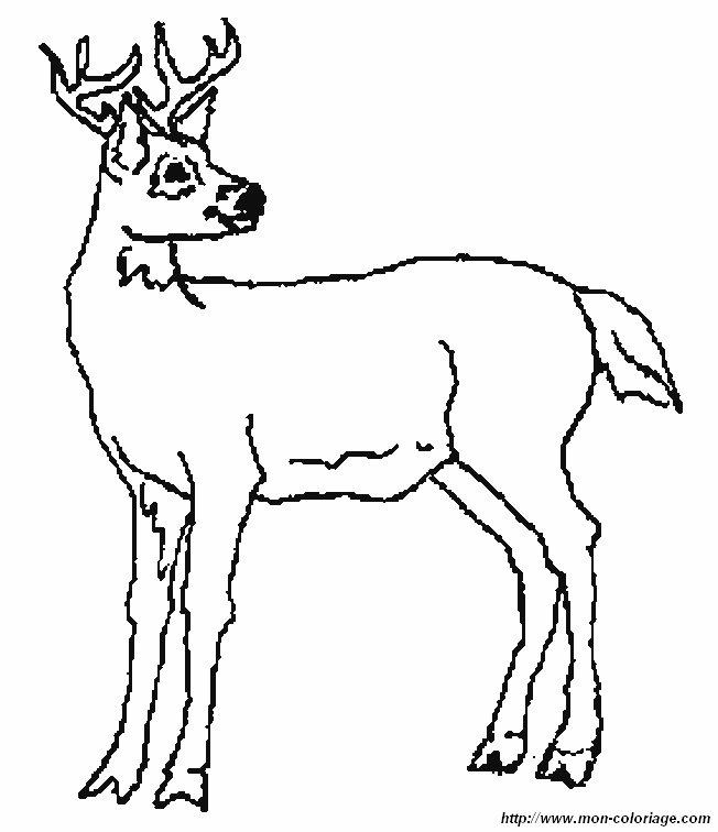 Ausmalbilder Verschiedene Tiere , bild hirsch 6