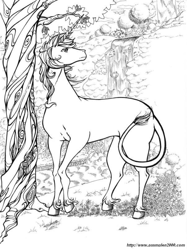 ausmalbilder fuer erwachsene einhorn  coloring and drawing