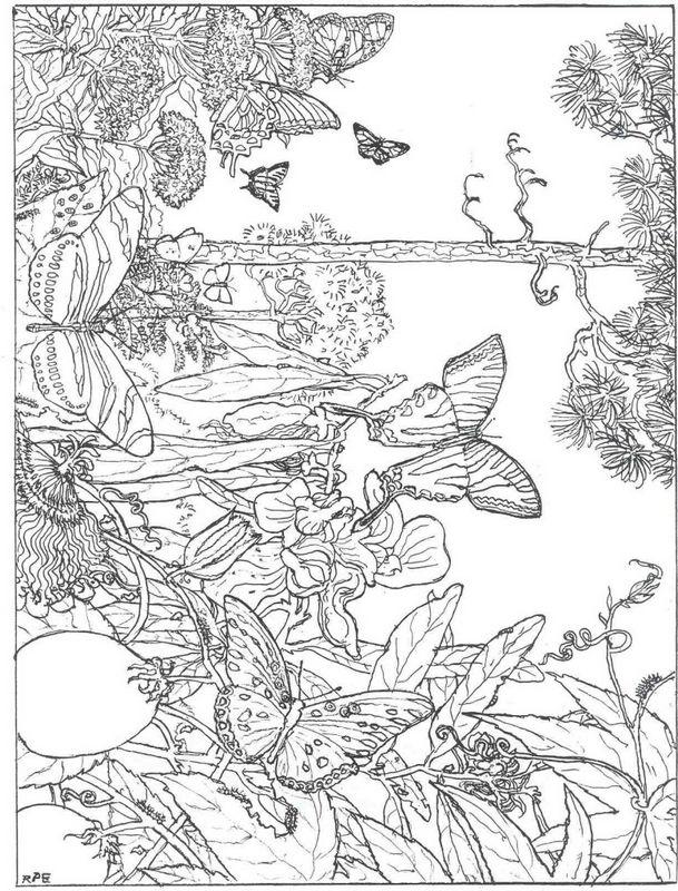 Ausmalbilder Für Erwachsene Bild Schmetterlinge In Der Natur