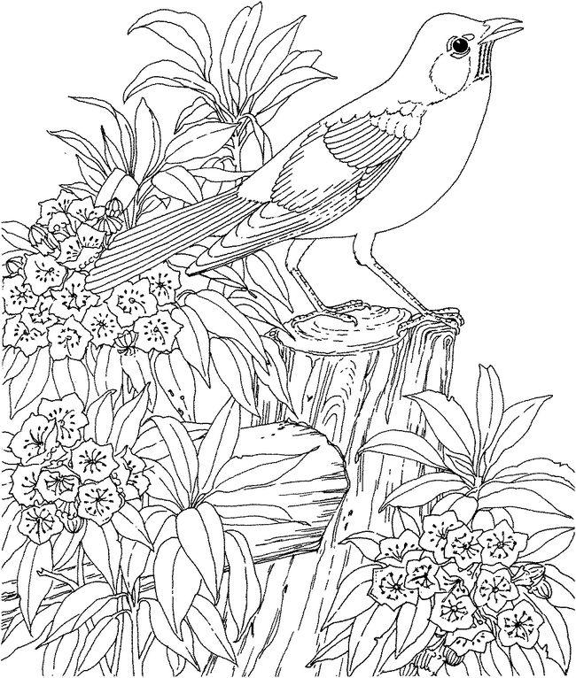 ausmalbilder für erwachsene bild vogel mit blumen