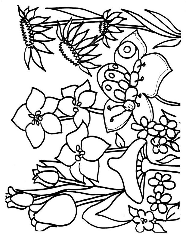 Ausmalbilder Blumen Bild Pilze Und Schmetterlinge