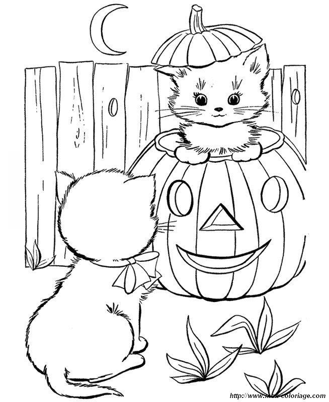 ausmalbilder katze bild kleine katzen fur halloween