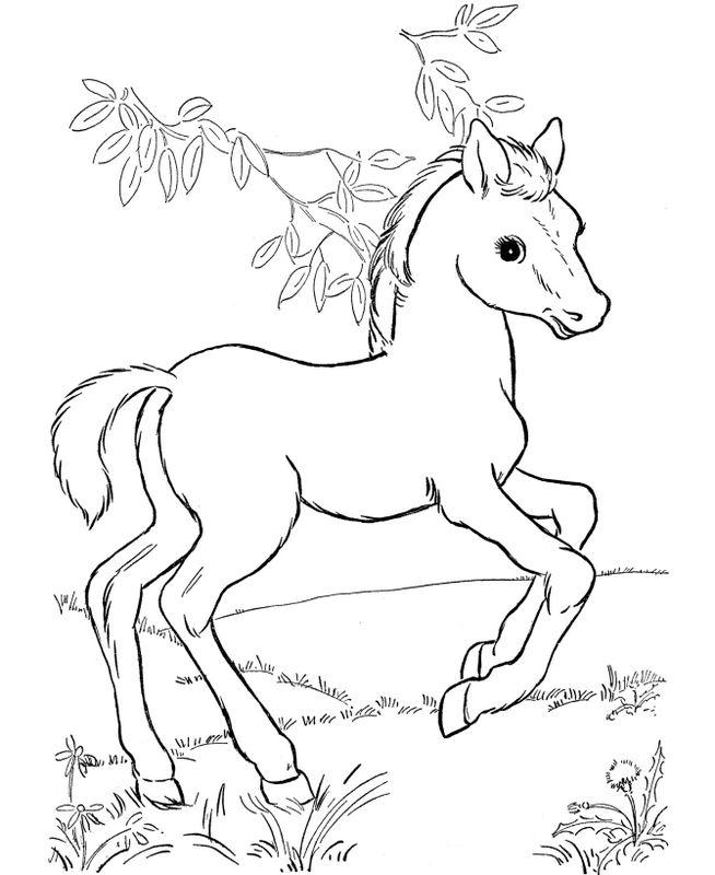 Ausmalbilder Pferde, bild Ein sehr freundliches Fohlen zum Ausmalen