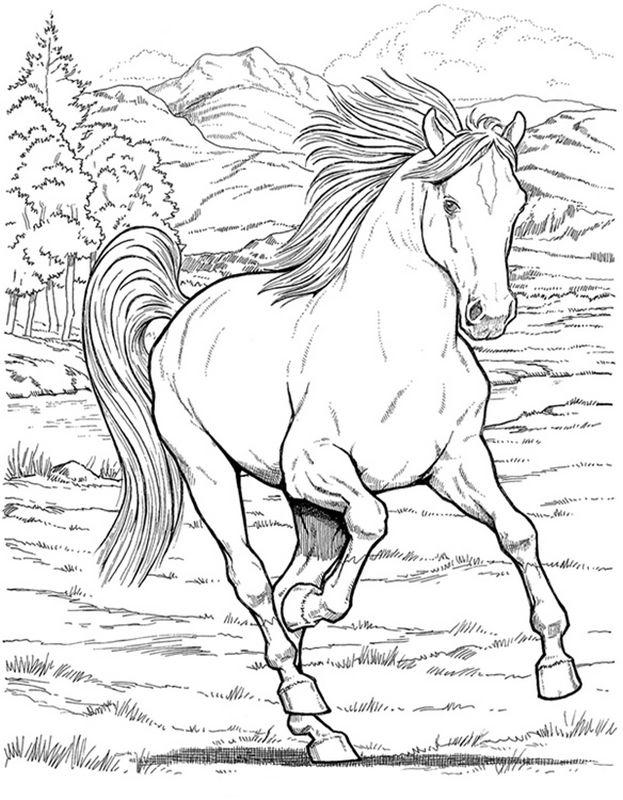 Ausmalbilder Pferde, bild Galopp im Wald