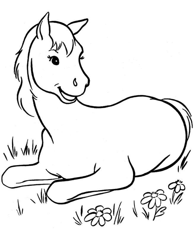 Ausmalbilder Pferde Bild Kleine Fohlen Auf Der Wiese