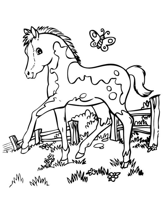 ausmalbilder pferde bild kleine fohlen mit einem