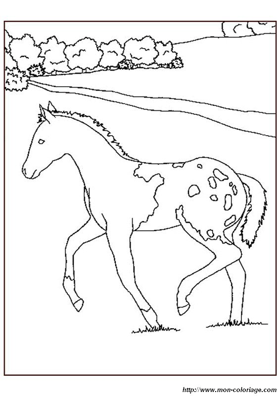 Ausmalbilder Pferde Bild Fohlen Auf Einer Wiese