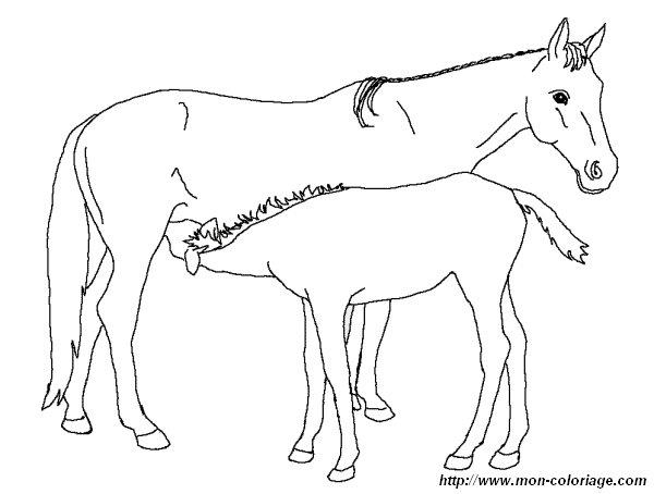 ausmalbilder pferde bild pferd 02