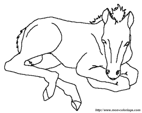 Ausmalbilder Pferde, bild pferd malvorlagen