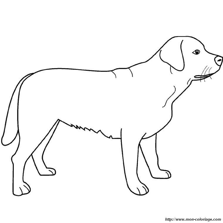 Ausmalbilder hund bild der labrador - Cane da colorare le pagine libero ...