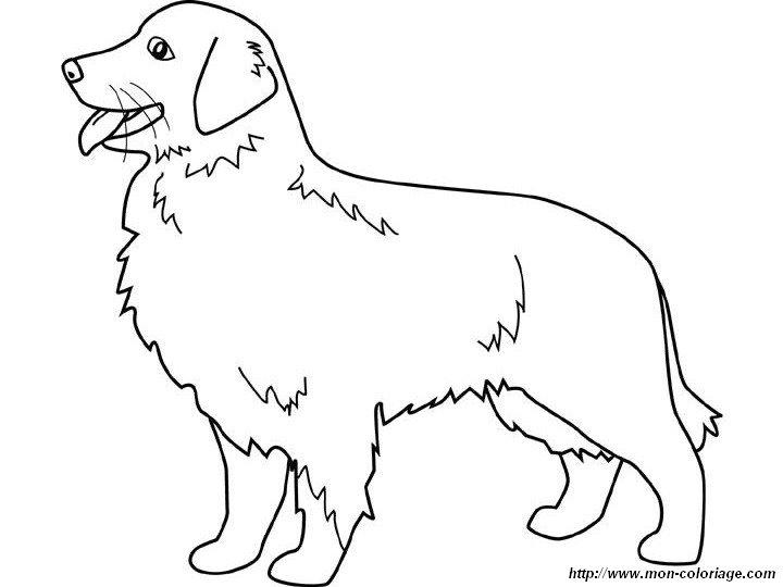 Ausmalbilder Hund Bild Goldener Apportierhund
