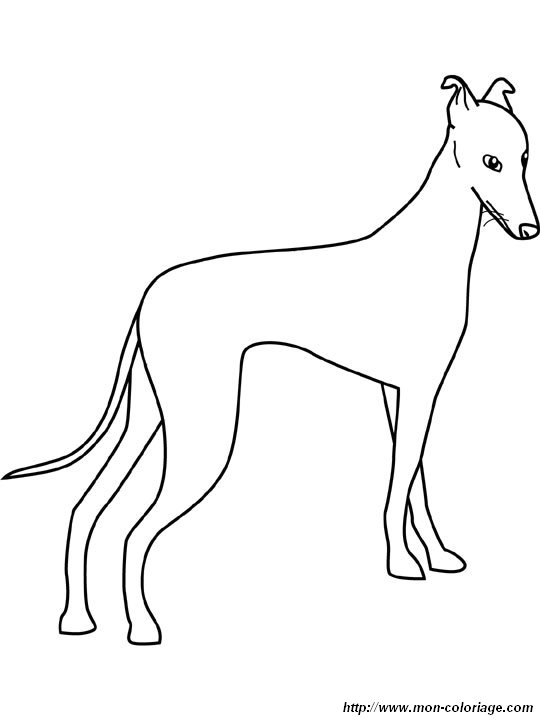 Ausmalbilder Hund Bild Windhund