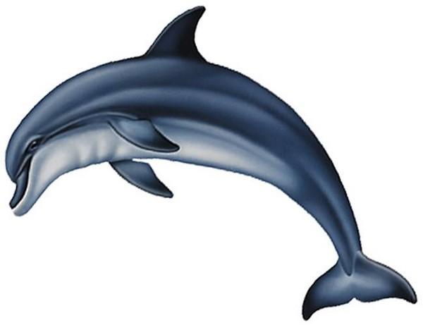 Ausmalbilder Delfin, bild delfin