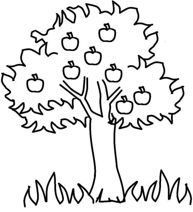 Ausmalbilder Frucht Oder Obst Bild Apfelbaum