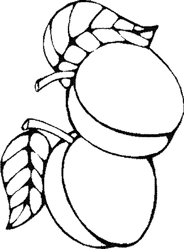 ausmalbilder frucht oder obst, bild zwei aprikosen