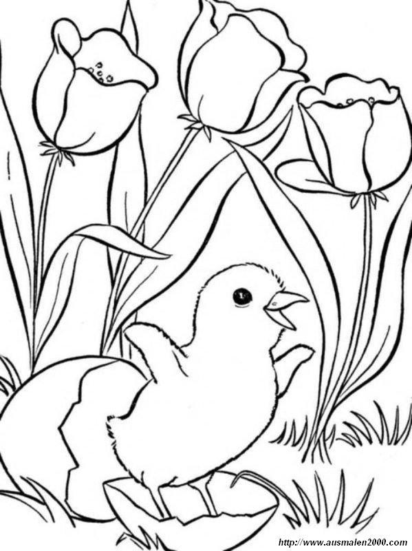 Ausmalbilder Frühling Bild Eine Geburt Unter Blumen