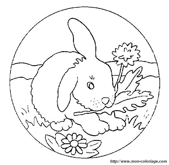 ausmalbilder kaninchen bild kaninchen 0026