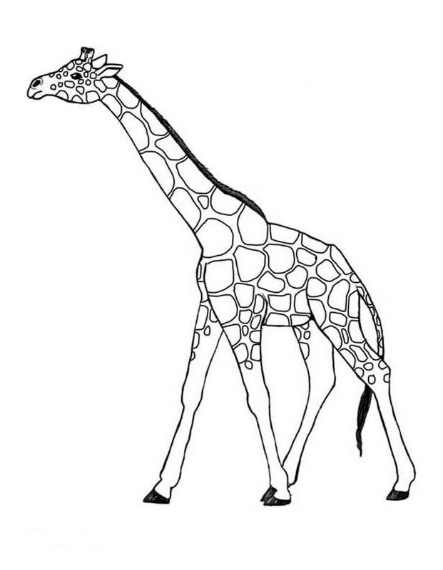 Ausmalbilder Malvorlagen für Lehrkräfte, bild Afrikanische giraffe