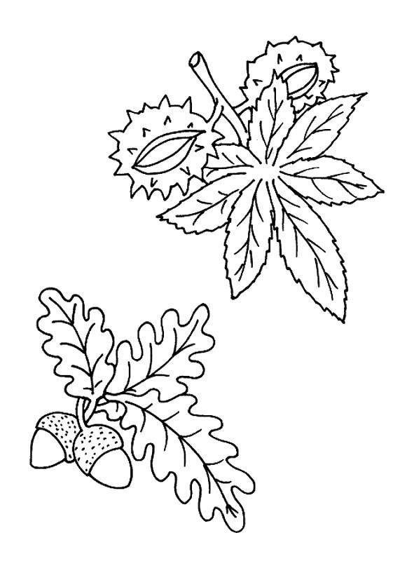 malvorlagen eicheln kastanien  coloring and malvorlagan