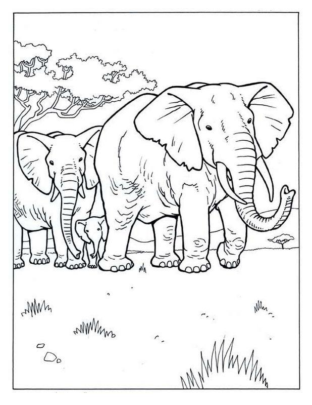 Wunderbar Malseite Elefant Mit Design Fotos - Ideen färben ...