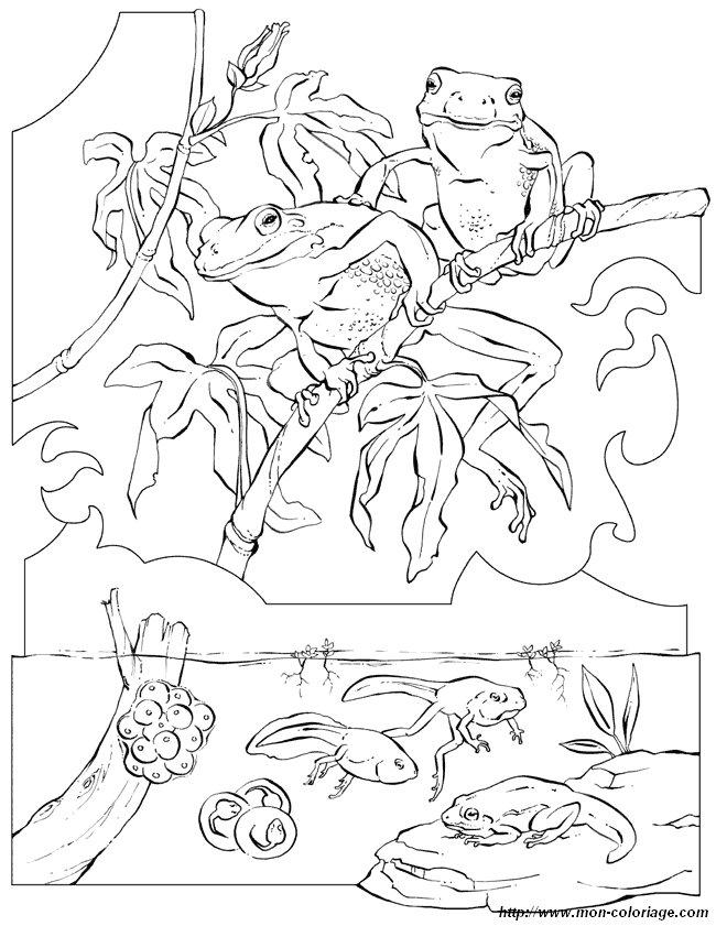 ausmalbilder malvorlagen für lehrkräfte bild frosch