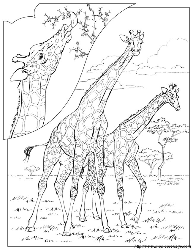 ausmalbilder malvorlagen für lehrkräfte bild giraffe