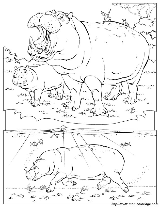 ausmalbilder malvorlagen für lehrkräfte bild nilpferd