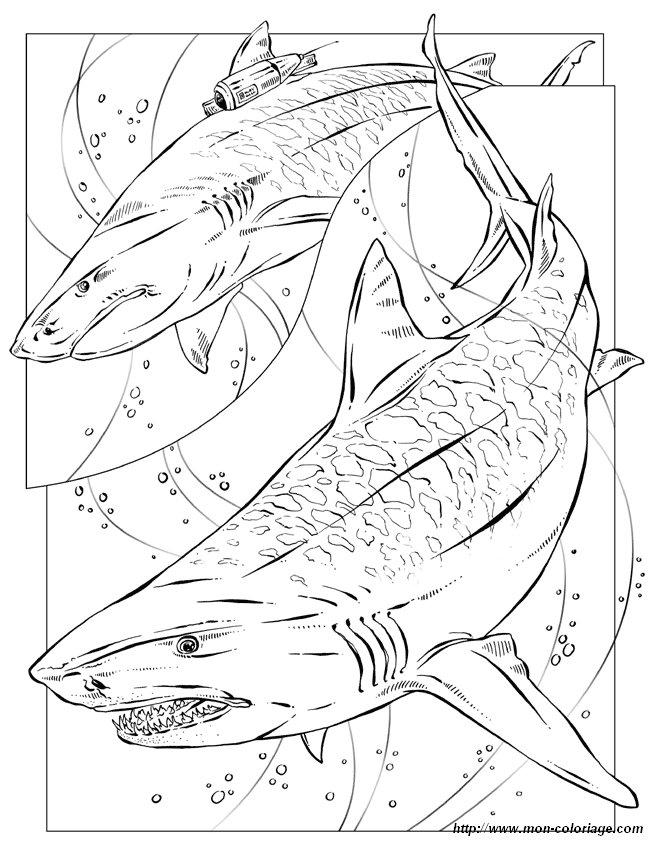 Ausmalbilder Malvorlagen für Lehrkräfte, bild tiger hai