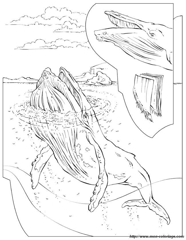 Otter Kleurplaat Ausmalbilder Malvorlagen F 252 R Lehrkr 228 Fte Bild Wal