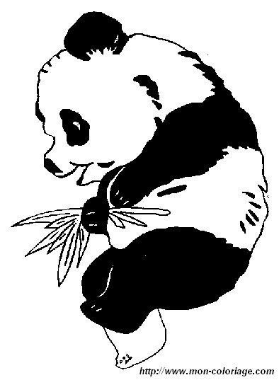 ausmalbilder panda bild panda4