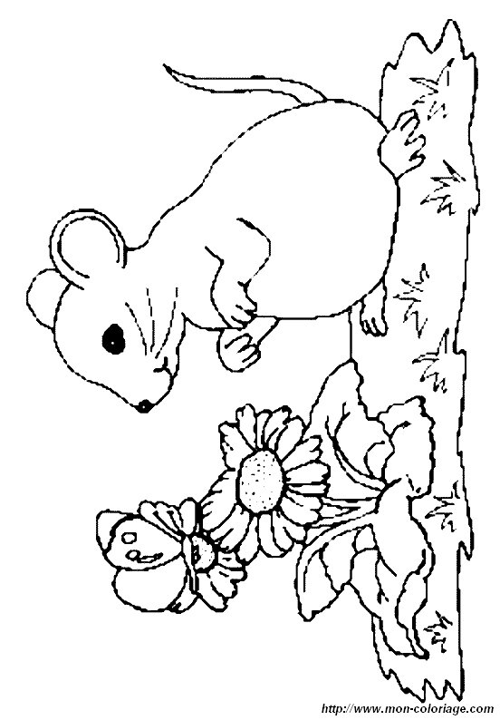 Fein Maus Eine Cookie Malseite Ideen - Ideen färben - blsbooks.com