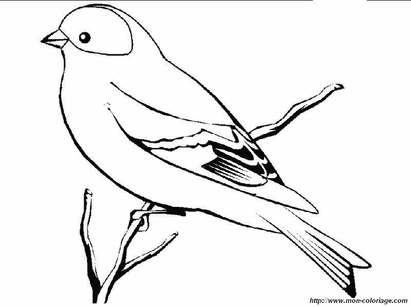 Ausmalbilder Vögel Bild Der Stieglitz