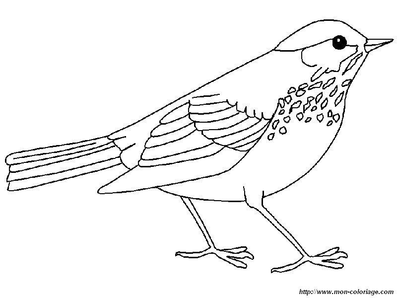 Ausmalbilder v gel bild die drosseln - Vogel vorlage ...
