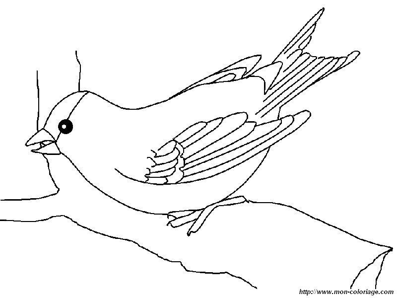ausmalbilder vögel bild einen stieglitz