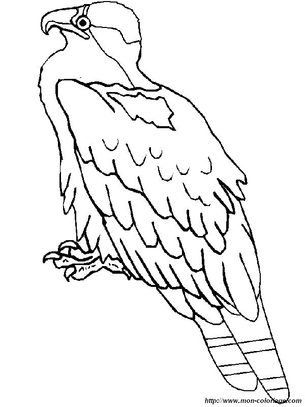 ausmalbilder vögel bild fischadler