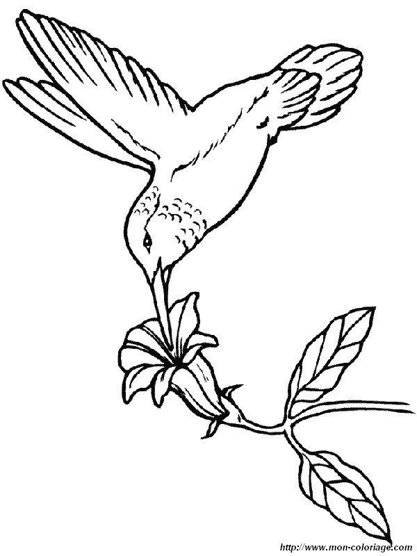Ausmalbilder V gel bild kolibris