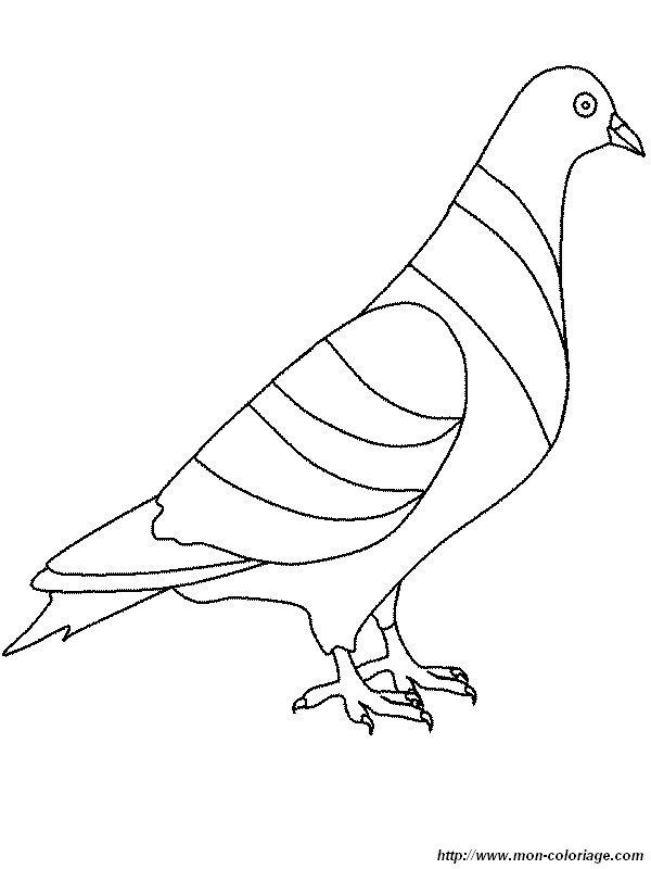 Ausmalbilder Vögel, bild taube